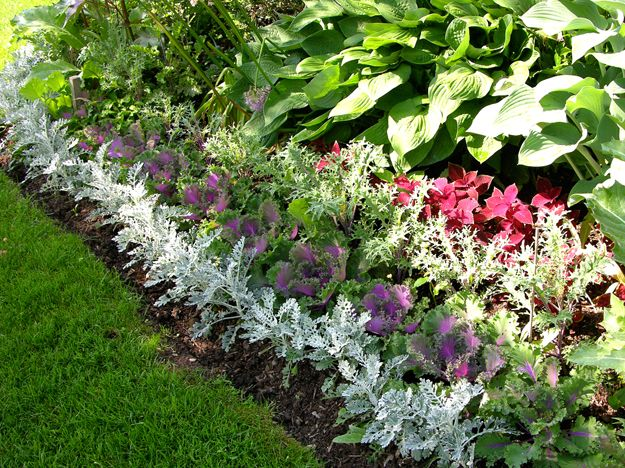 Around The Border Of Each Garden Bed Is Dusty Miller And Red Coleus This Repetition Of Plant Garden Design Magazine Front Garden Landscape Landscape Boarders