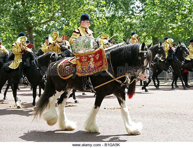 One of the Two Magnificent Drum Horses that Lead the Mounted Band in the…