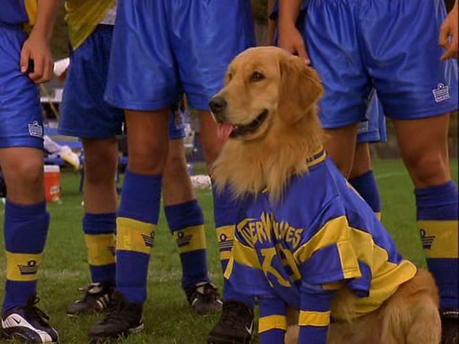Air Bud 3 World Pup 2001 With Images Air Bud Air Buddies