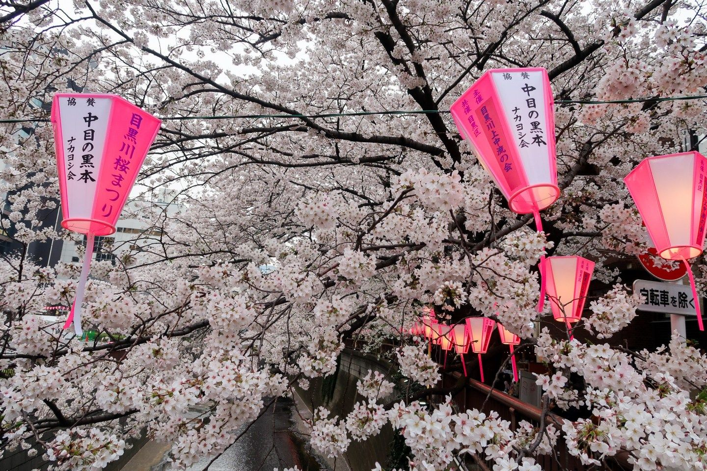 Best Spots For Cherry Blossom Viewing In Tokyo Cherry Blossom Flower Festival Blossom