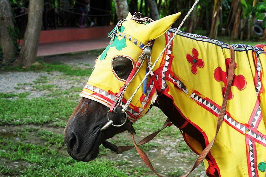 マレーシアのコタキナバルには服を着た馬がいる 実は伝統的なカッコイイウマだった件 コタキナバル 馬 伝統