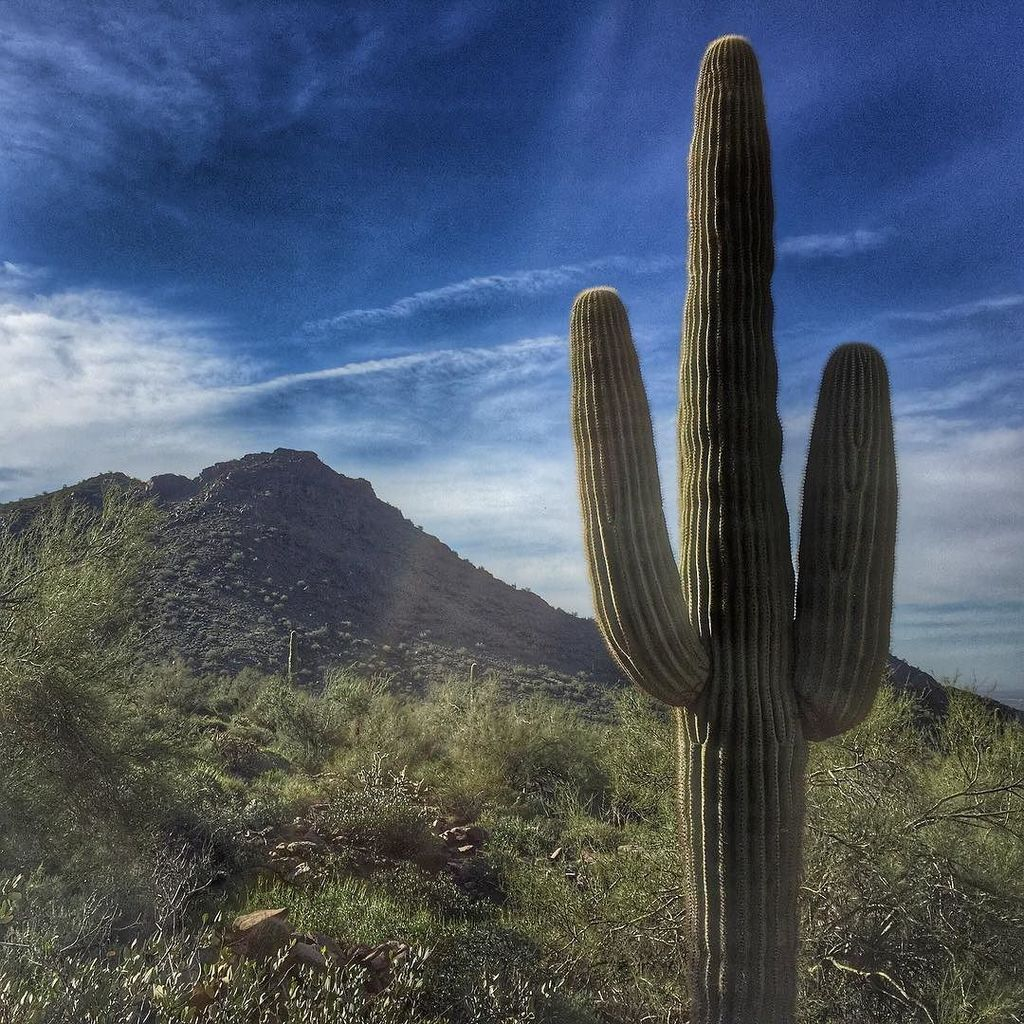 Picture perfect. MT StuffedSuitcase: Sunrise morning hike in the McDowell-Sonoran Preserve https://t.co/RzHPghUJpu https://t.co/zjRxLHmO1N