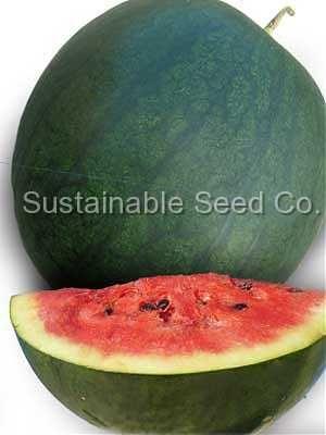 Florida Giant Watermelon  Jan-August $2.29 (20 seeds)