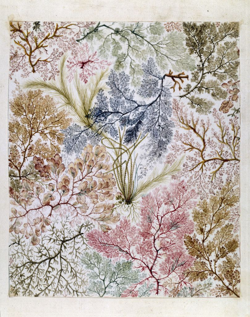 Seaweed fabric design by william kilburn  tang and ware also best images in rh pinterest