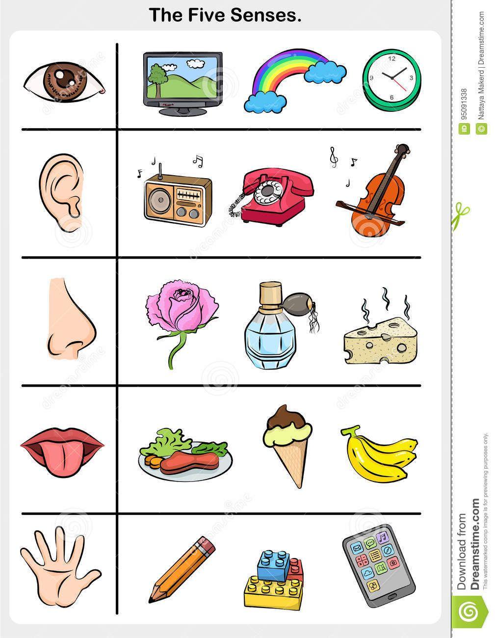Pin By Alina Comsa On Los Sentidos Math Activities Preschool Five Senses Preschool Preschool Activities [ 1300 x 1009 Pixel ]