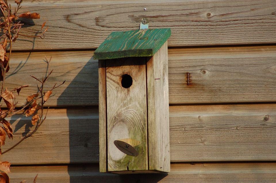Birdhouse, Madeira, Jardim, Caixa De Madeira