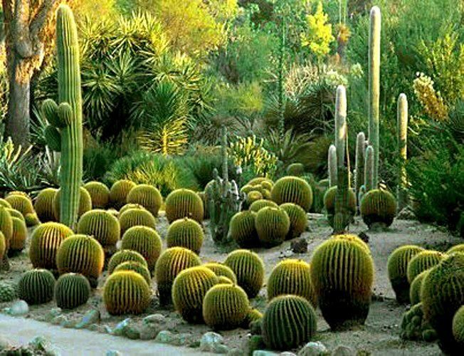 BEAUTIFUL GARDEN.....CACTUS. | PLACES & THINGS... | Pinterest ...