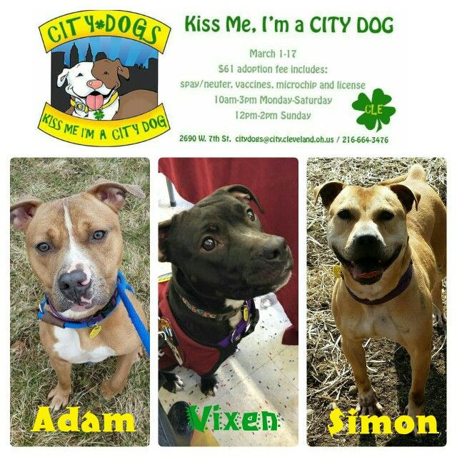 Pin By Cleveland Pitties On Rescue Collages Dog Kisses City Dog