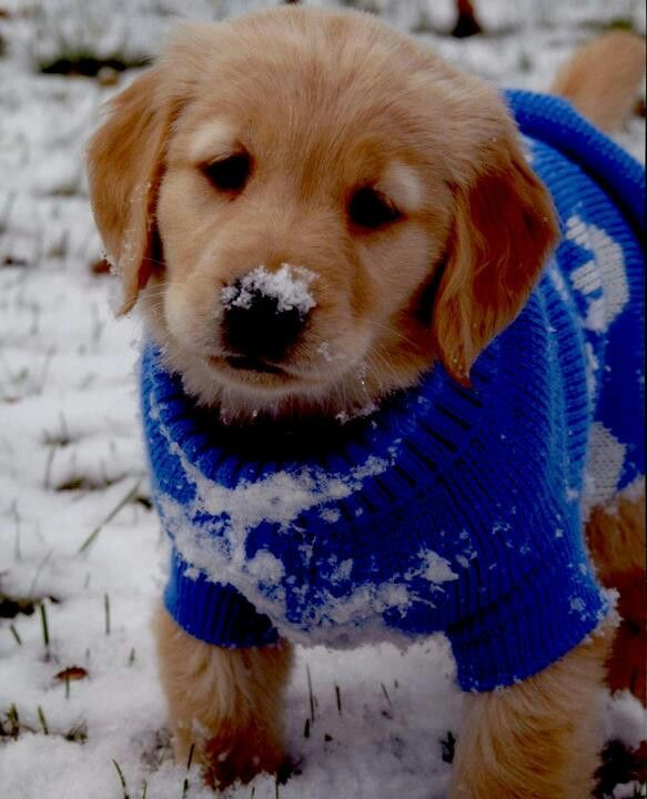 15 Adorable Snowy Animal Pictures To Make You Feel Better About