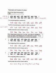 Transcription and Translation Practice Worksheet Beautiful ...