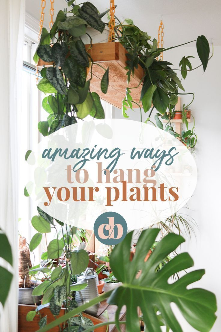Clever Ways To Hang Your Plants is part of Indoor tree plants, Live indoor plants, Best indoor plants, Growing plants indoors, Indoor plants, Trees to plant - Check out the most clever ways to hang plants in your home! Tons of house plants inspo from some amazing Instagramers  All easy to DIY!