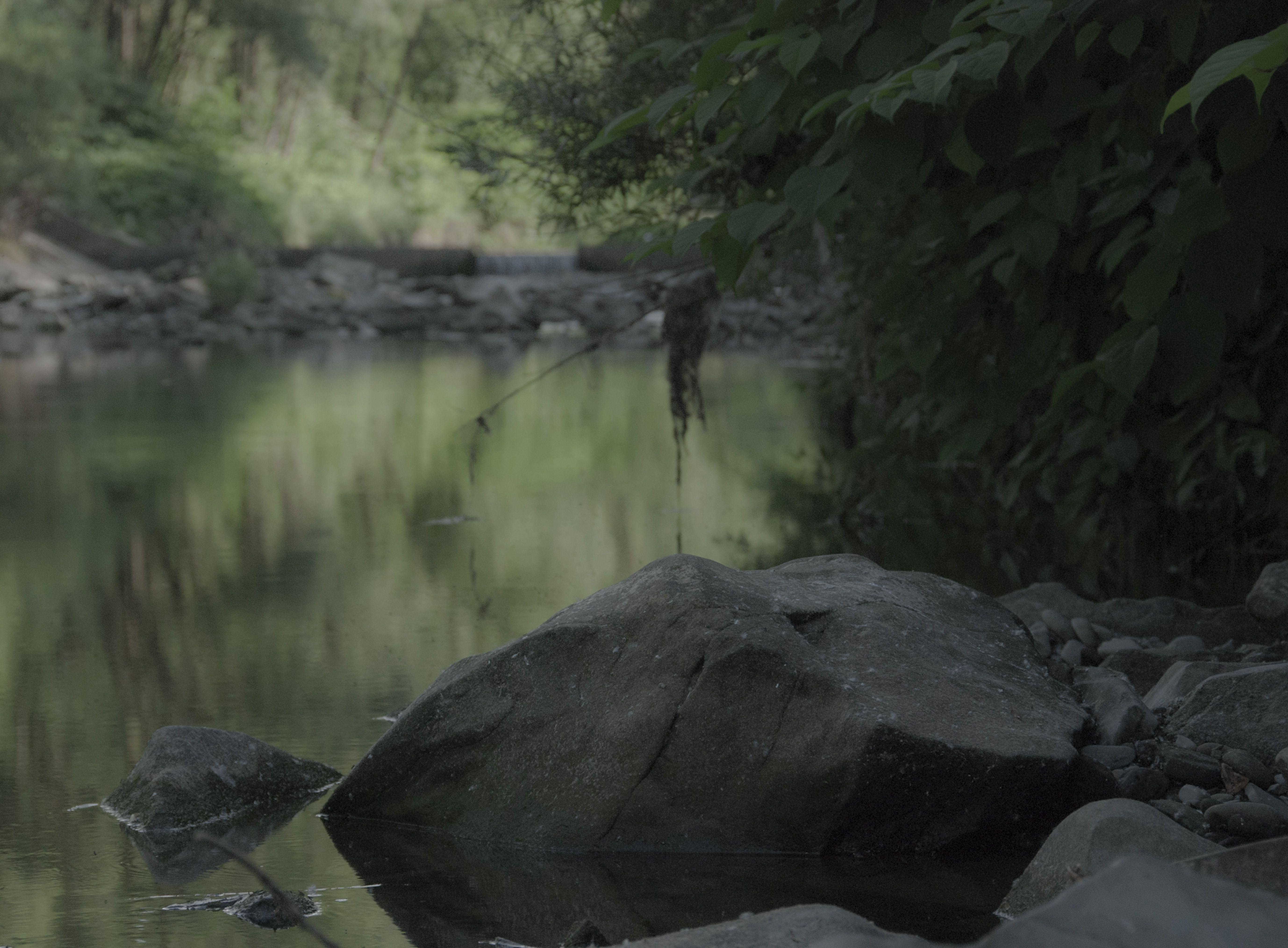 Myśli ujarzmione w ciszy spełnienia Łopian schronieniem dla ważki A kamień milczy  13. czerwca 2015 r.