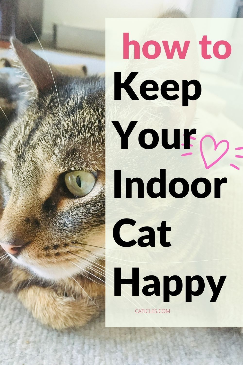 Caticles Mewsletter Free Indoor Cat Happiness Resources In 2020 Indoor Cat Cats Cat Parenting