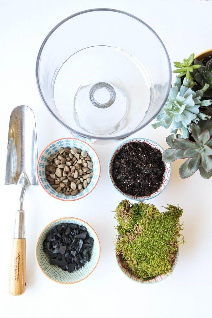 Photo of How to Make a Succulent Terrarium