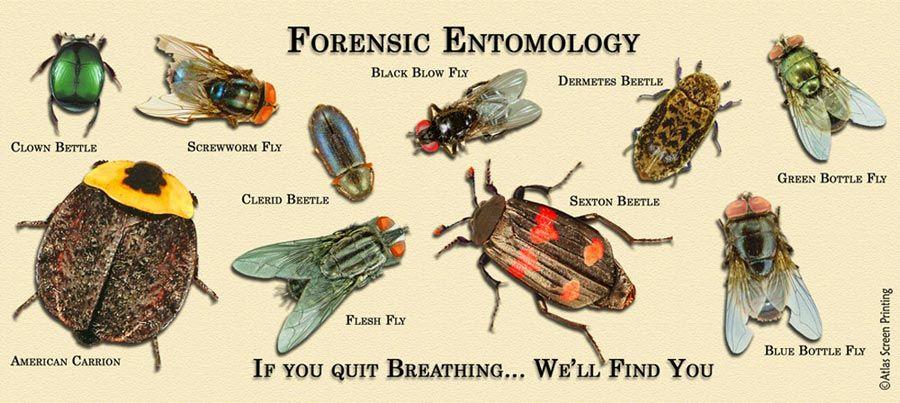 Catalog #5196: Forensic-Entomology-Mug (click to close) | Forensic ...