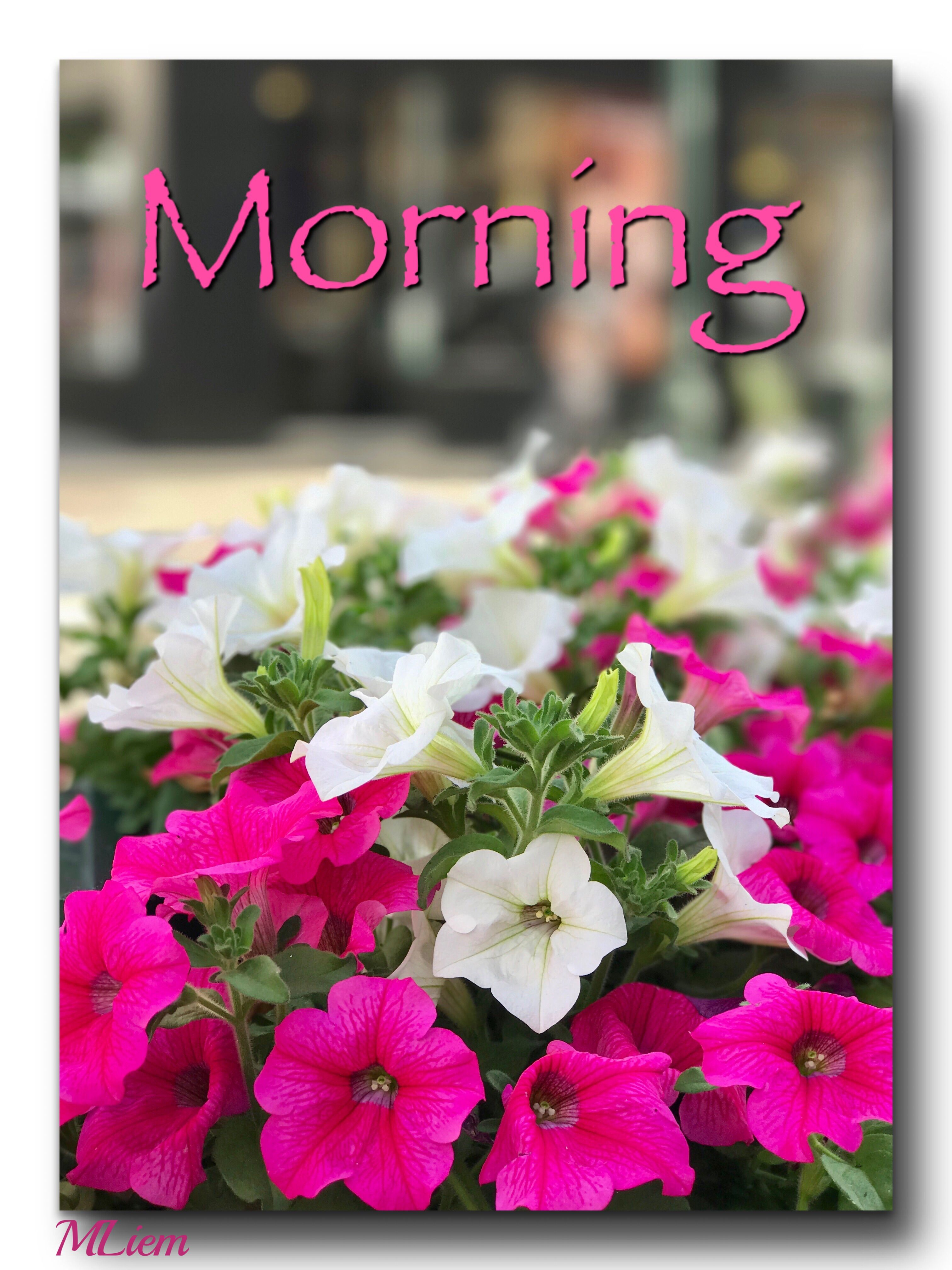 Pin by sathya on Morning Good morning flowers, Morning