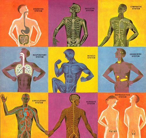Human body system | Human Body System | Pinterest | Body systems ...