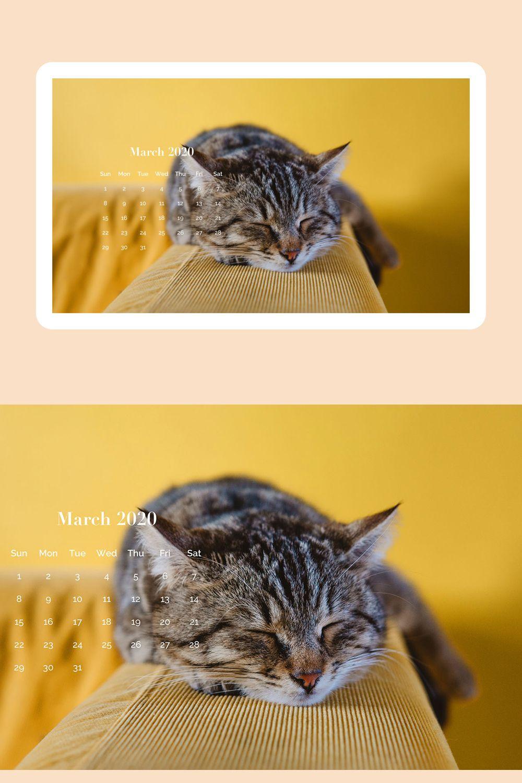 March 2020 5k Calendar Cat Wallpaper In 2020 Cute Cat Wallpaper