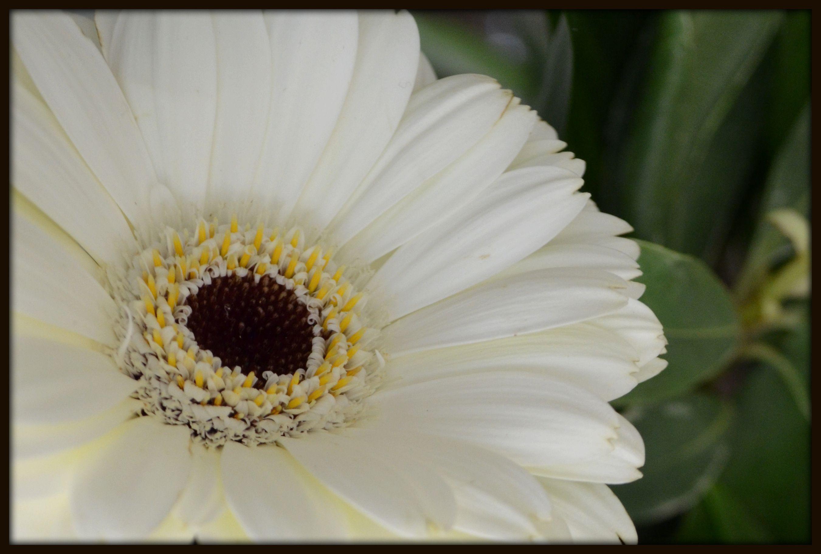 Pin by Marissa Aragon on witte bloemen Flower garden