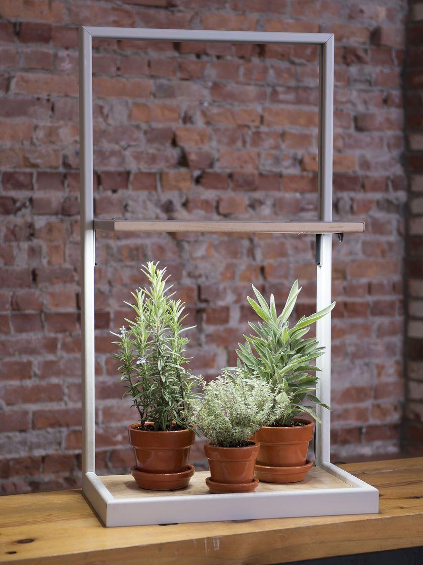 Decorative led grow lights coltura led grow frame terrariums