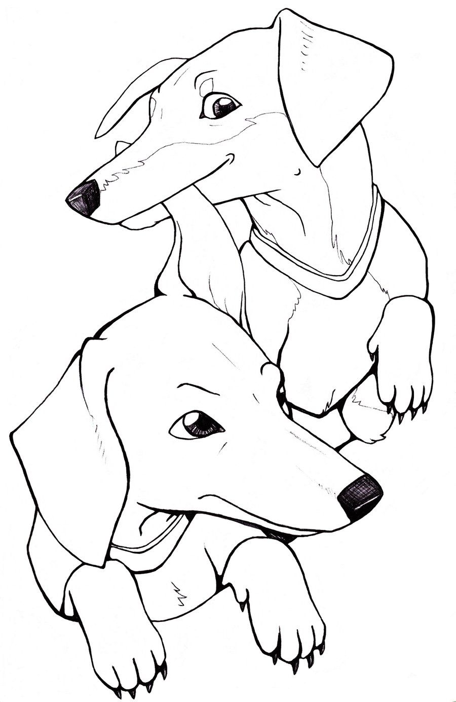 Bailey And Miley By Drmurasaki On Deviantart Dachshund Colors Dog Coloring Page Dog Drawing