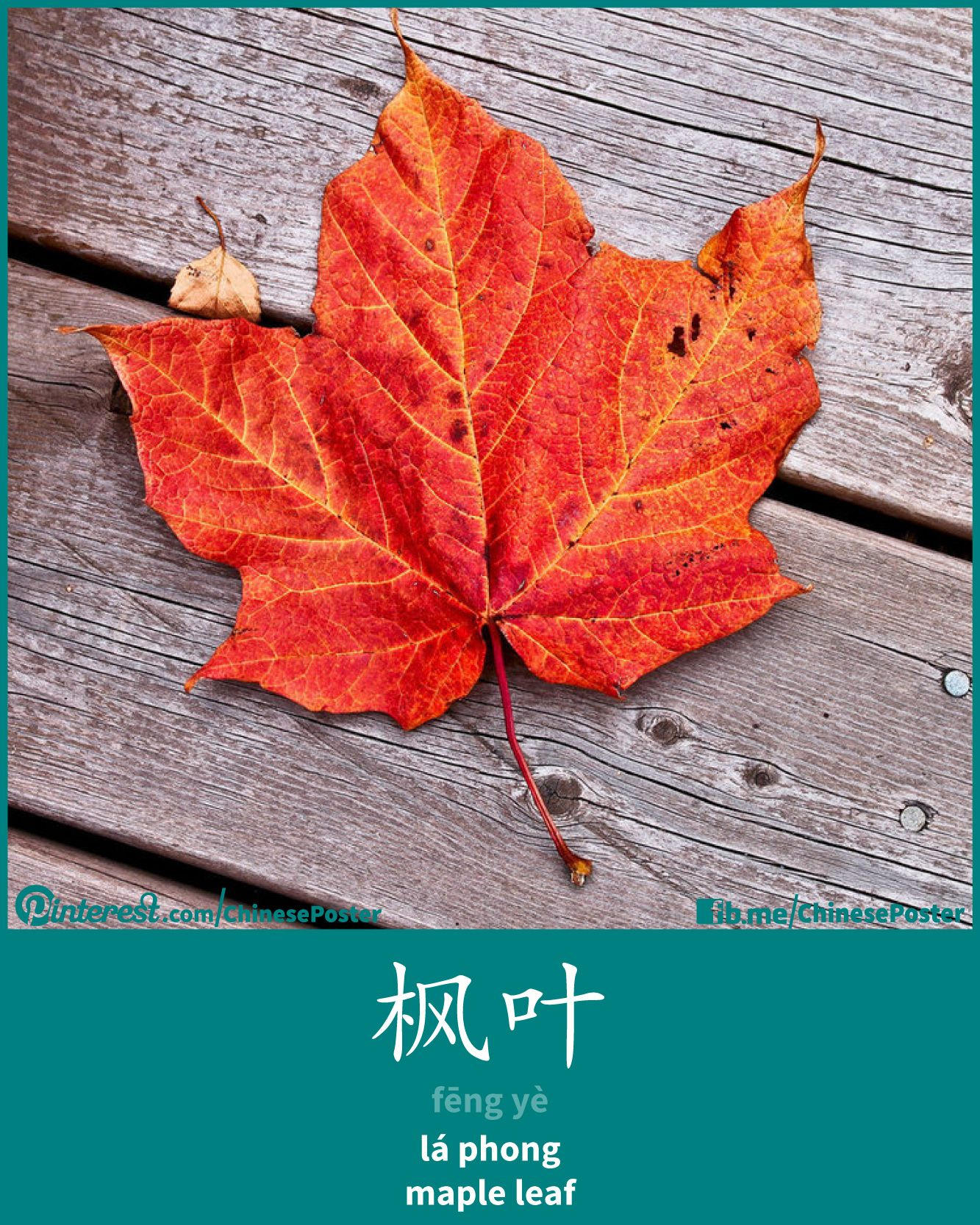 Fng Y L Phong Maple Leaf Chinese Words Plants
