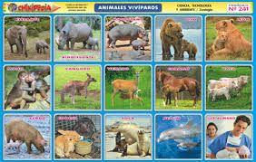 Lista animales salvajes yahoo dating 4