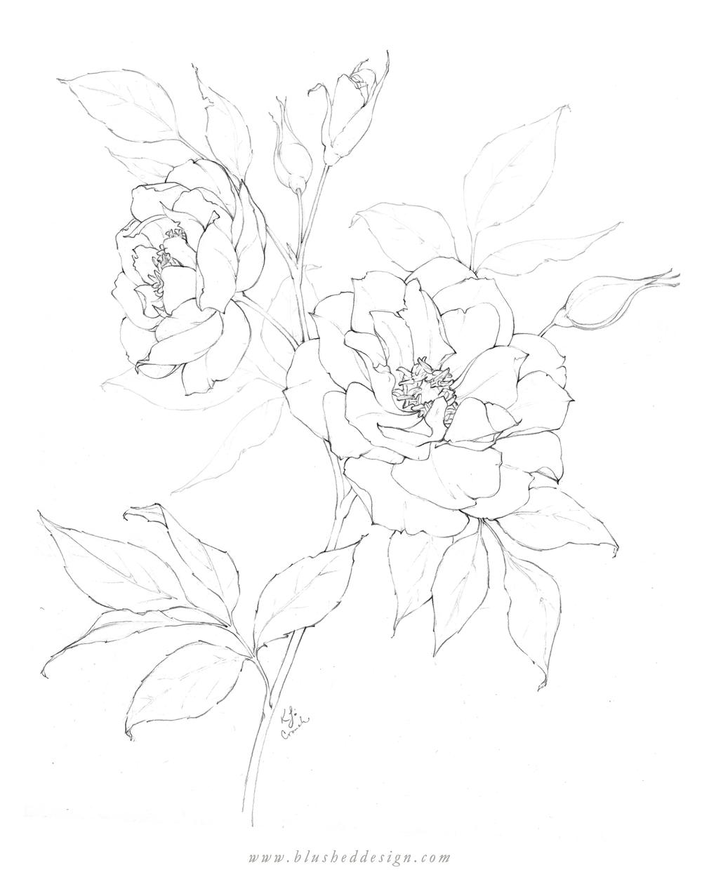 Flower Drawings Spring 2019 Blushed Design Flower Drawing Floral Drawing Flower Line Drawings