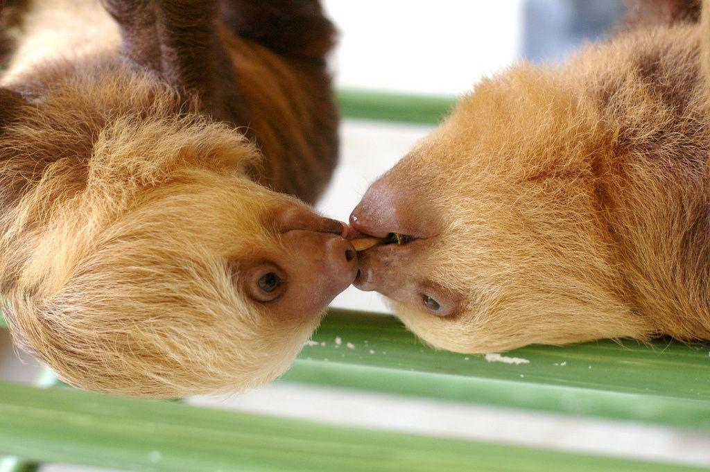 Sloths — Cute Overload