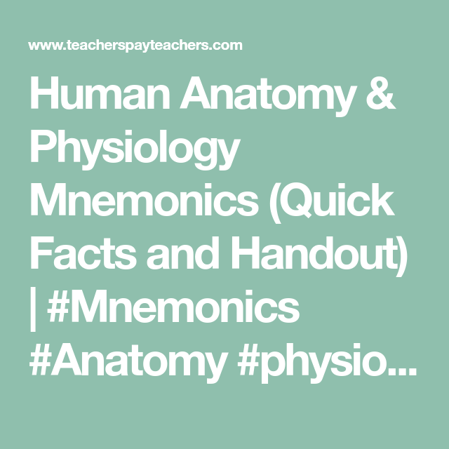 Human Anatomy Physiology Mnemonics Quick Facts And Handout