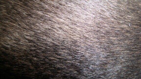 Black fur HD