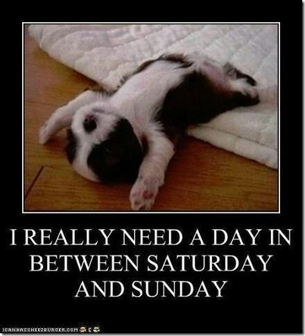 Image result for nice weekend with pets