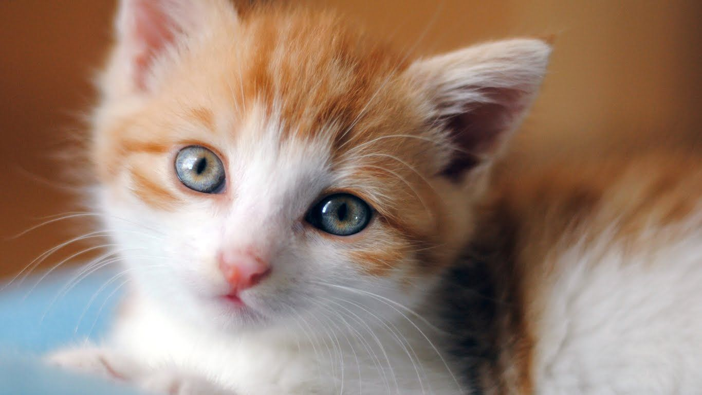 Top 10 Cute Baby Cat Kitten - cute Baby kittens ...