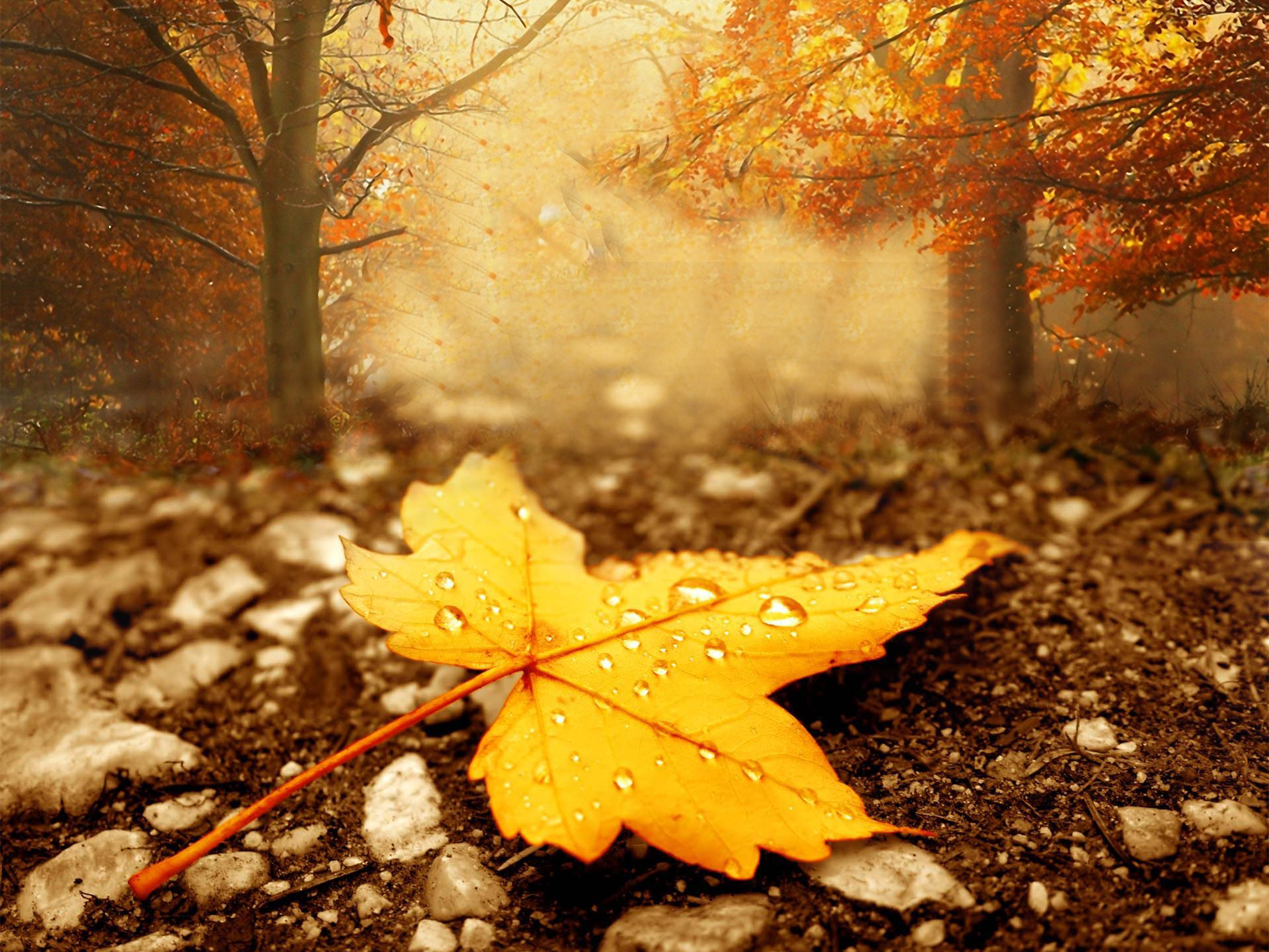 Leaf Autumn Hq Wallpaper V372q Hd Wallpaper Colores De Otono Arte Otono