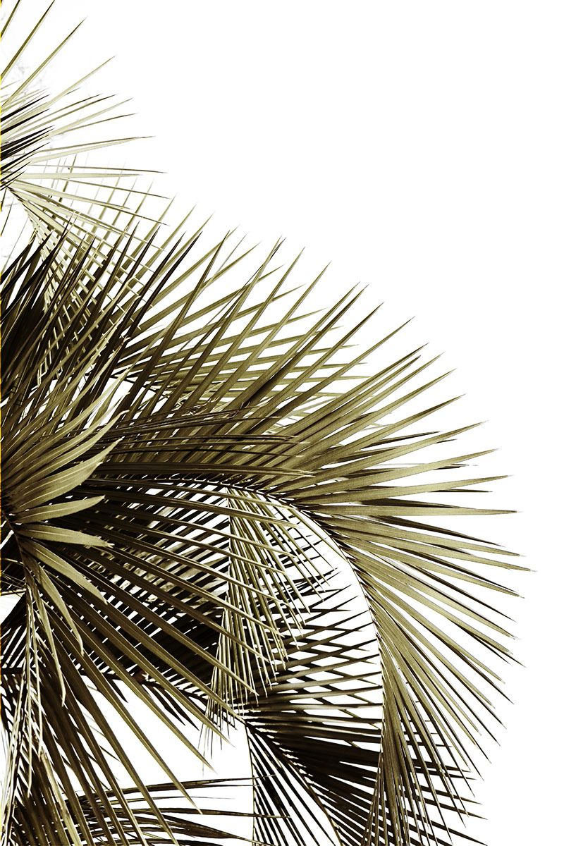 'first impressions'   palm branches, Beziers, Languedoc, France   Mary Jo Hoffman