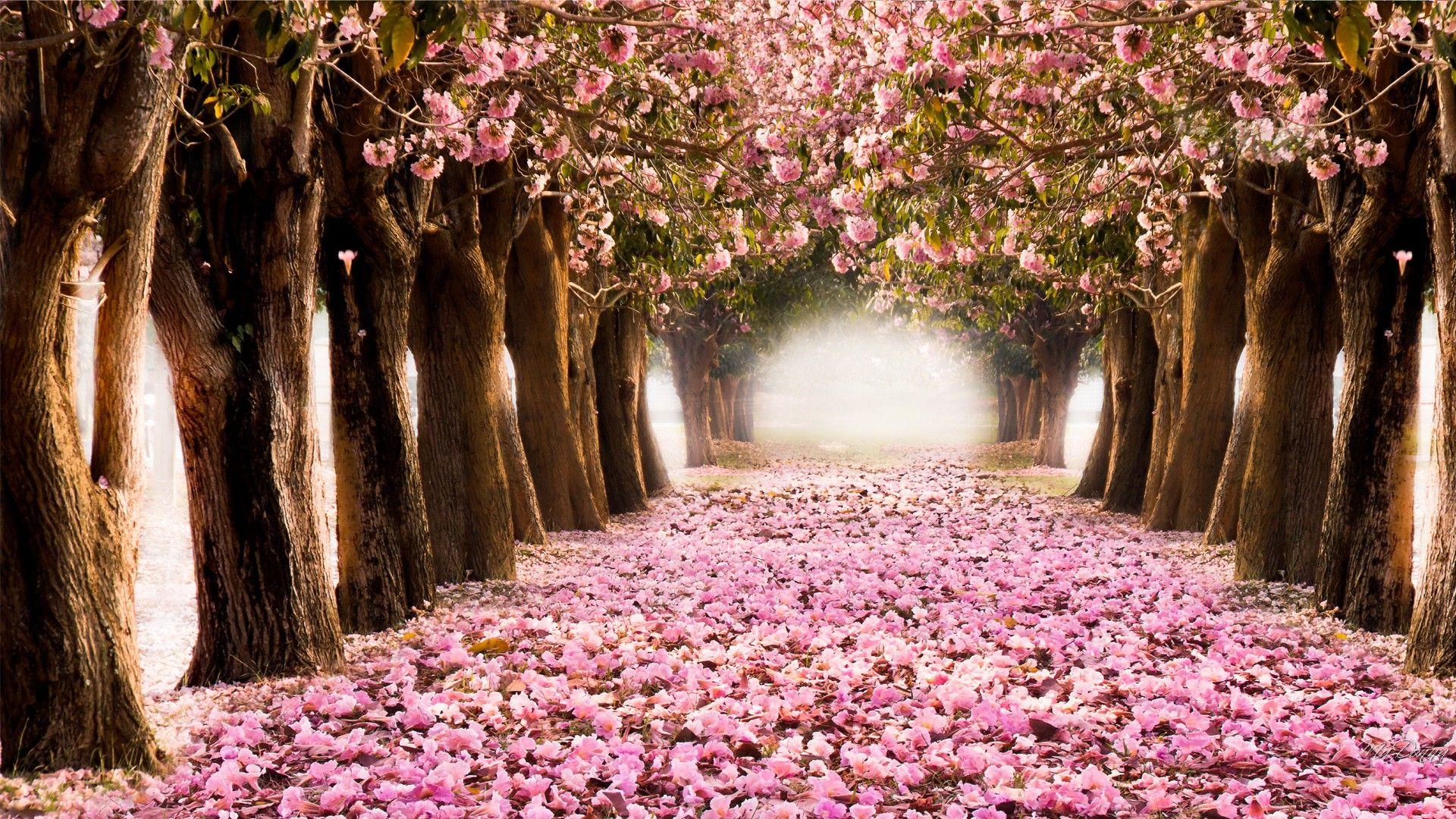 Desktop HD Spring Wallpaper | Spring wallpaper, Spring desktop ...