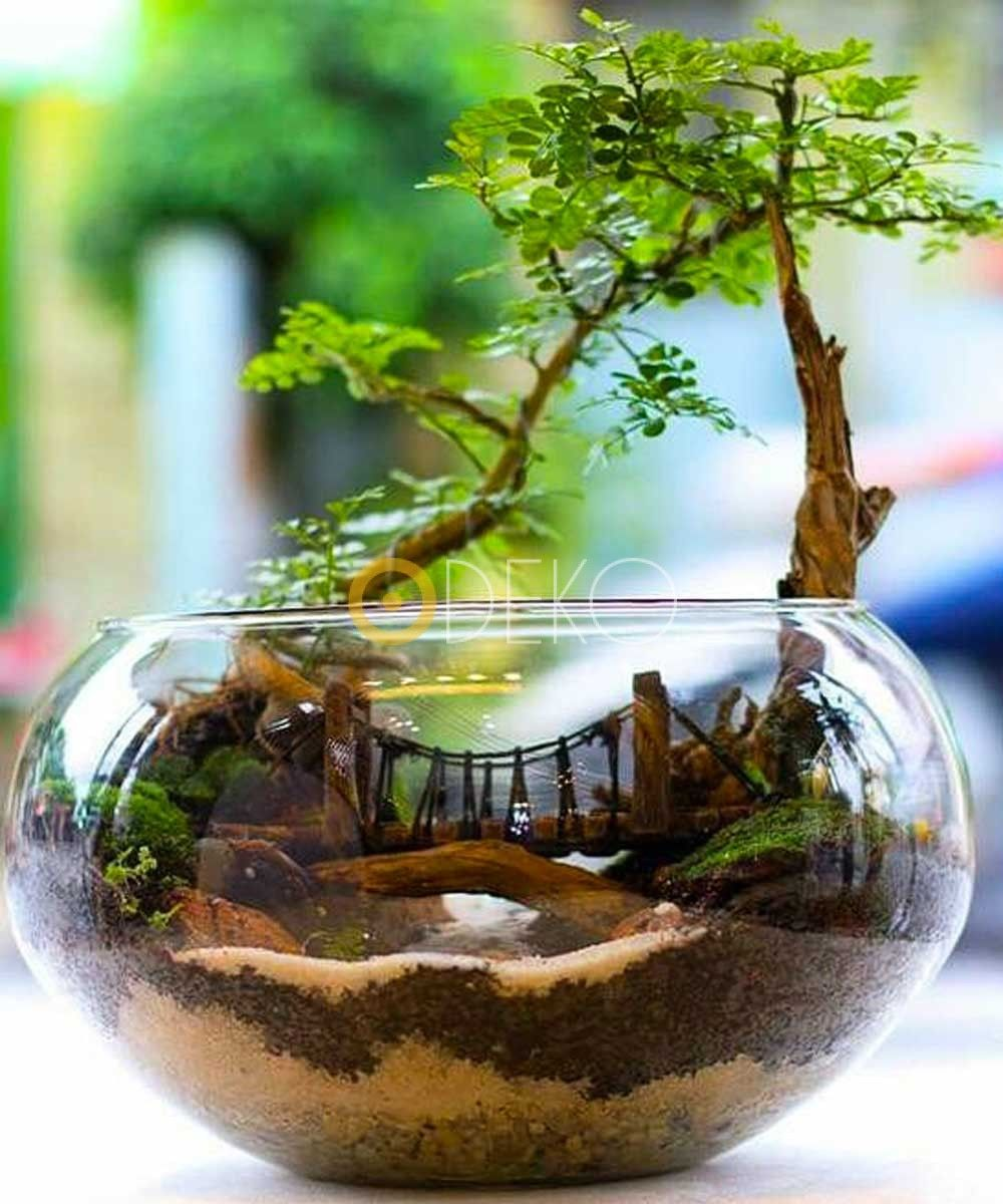 terrarium miniatur garten dekoration ideen 2019. Black Bedroom Furniture Sets. Home Design Ideas