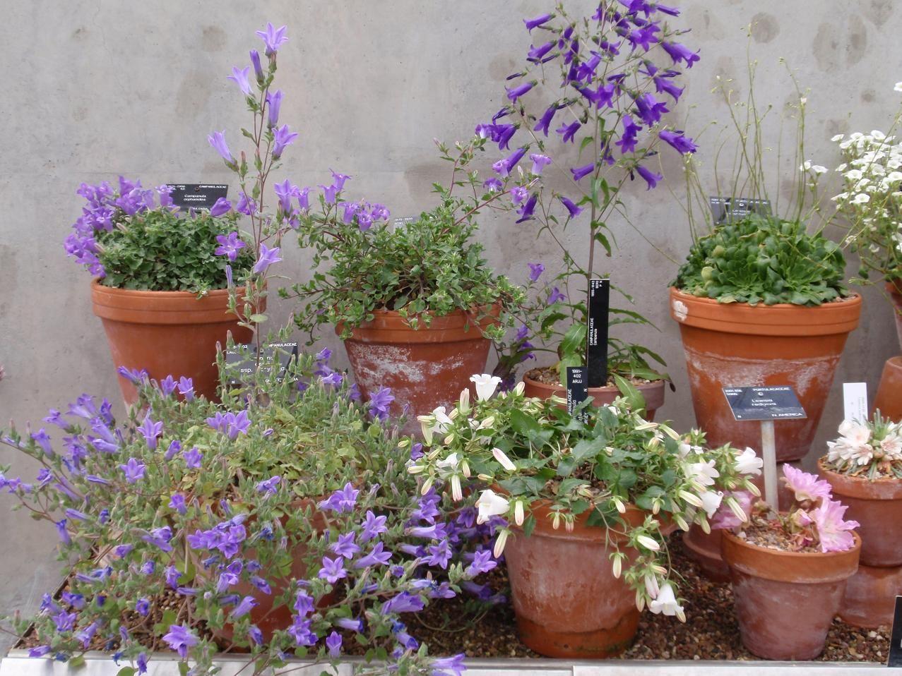 Sziklakerti növények leírása, gondozása