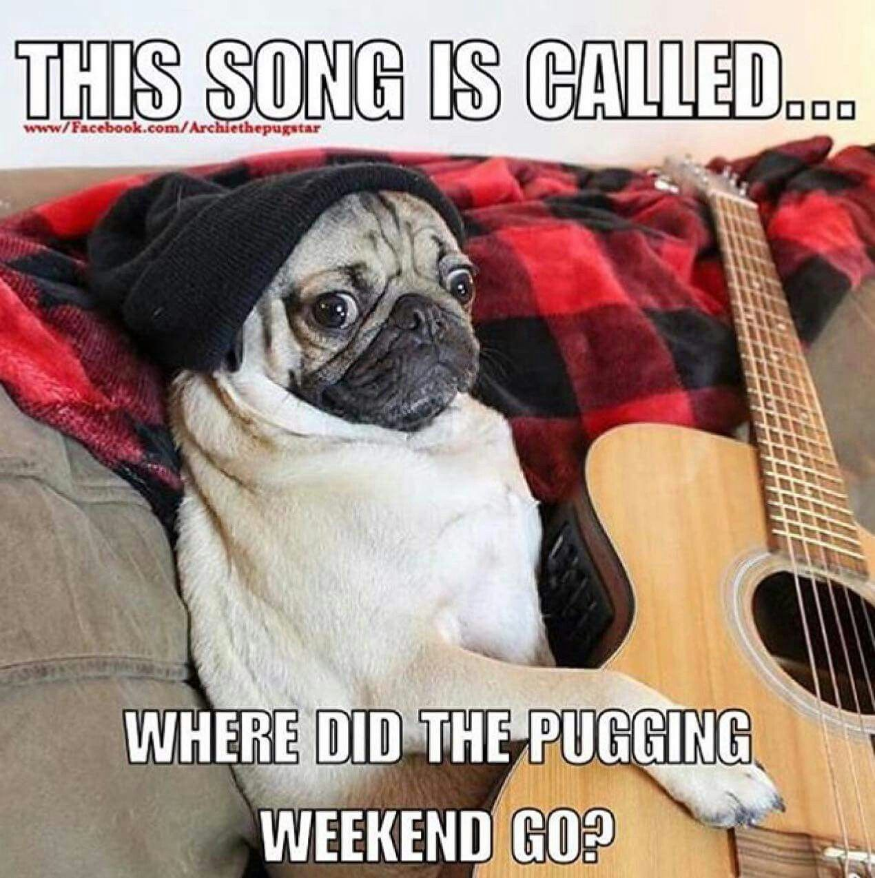 Where Did The Pugging Weekend Go Pugs Dogs Retweet Pug