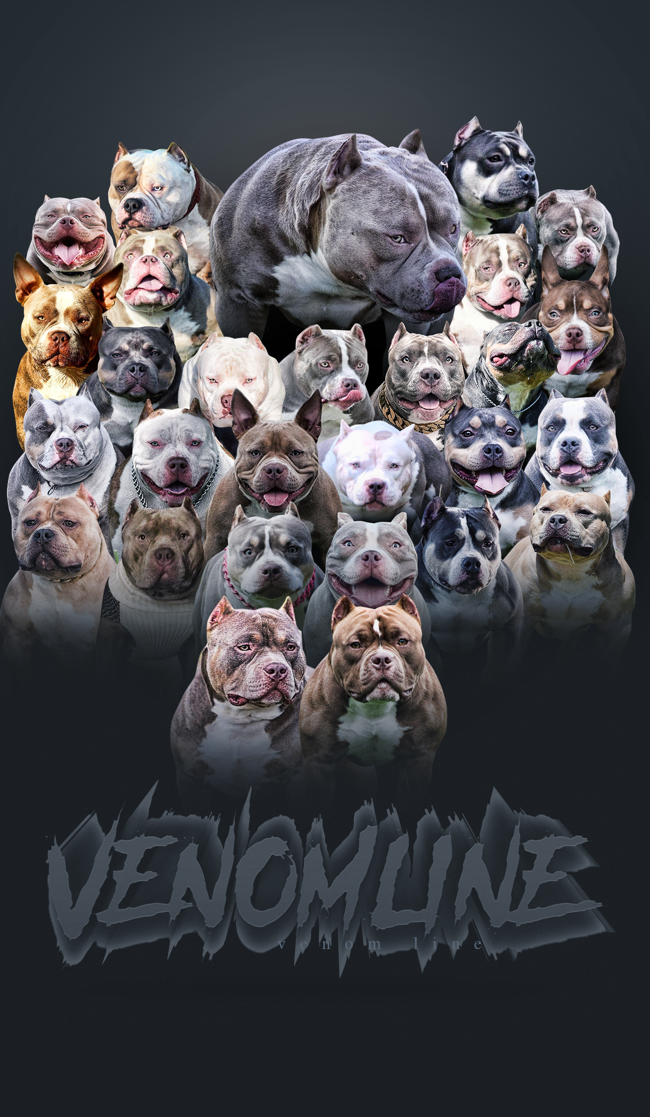 Top American Bully Kennels Bloodlines Venomline American