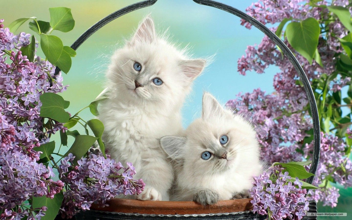 Cat · Summer Kittens