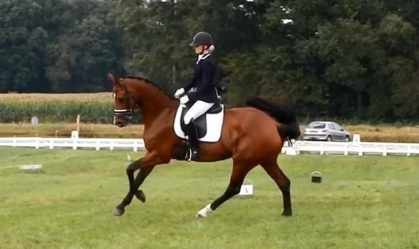 Paarden te koop: Gemma