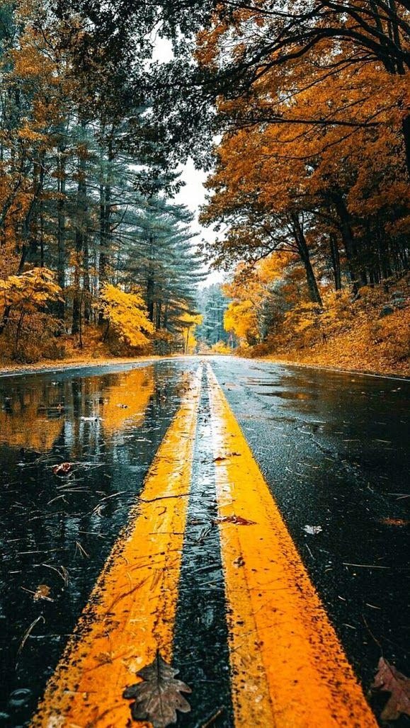 MfG an R.A., nein ich werde nicht auf den Strich gehen !!! #autumnscenery