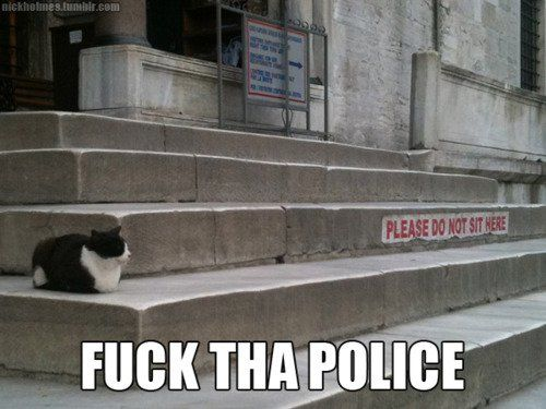 Cats are above the law.