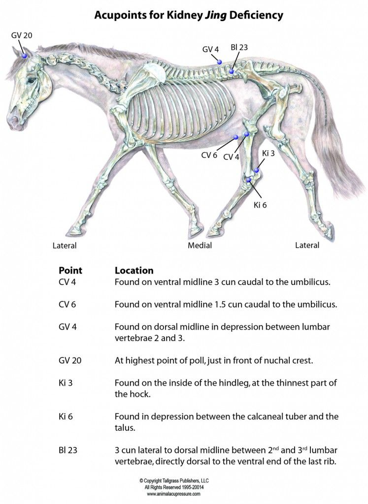 Acupts For Ki Jing Deficiency Animal Acupressure Horse Massage Equine Massage