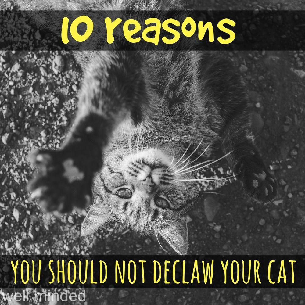 10 reasons you should not declaw your cat Estrategias de