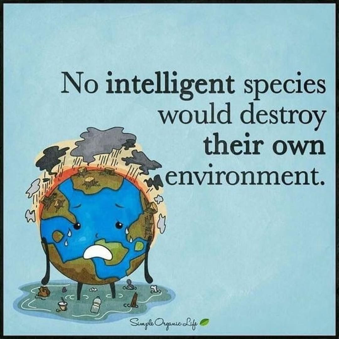 No Intelligent Species Would Destroy Their Own Environment Save