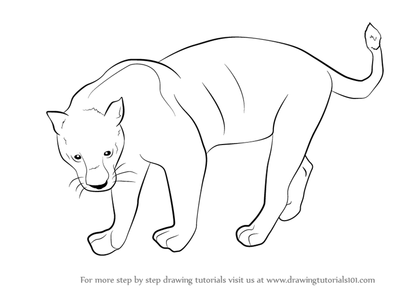Learn How To Draw A Black Panther Wild Animals Step By Step