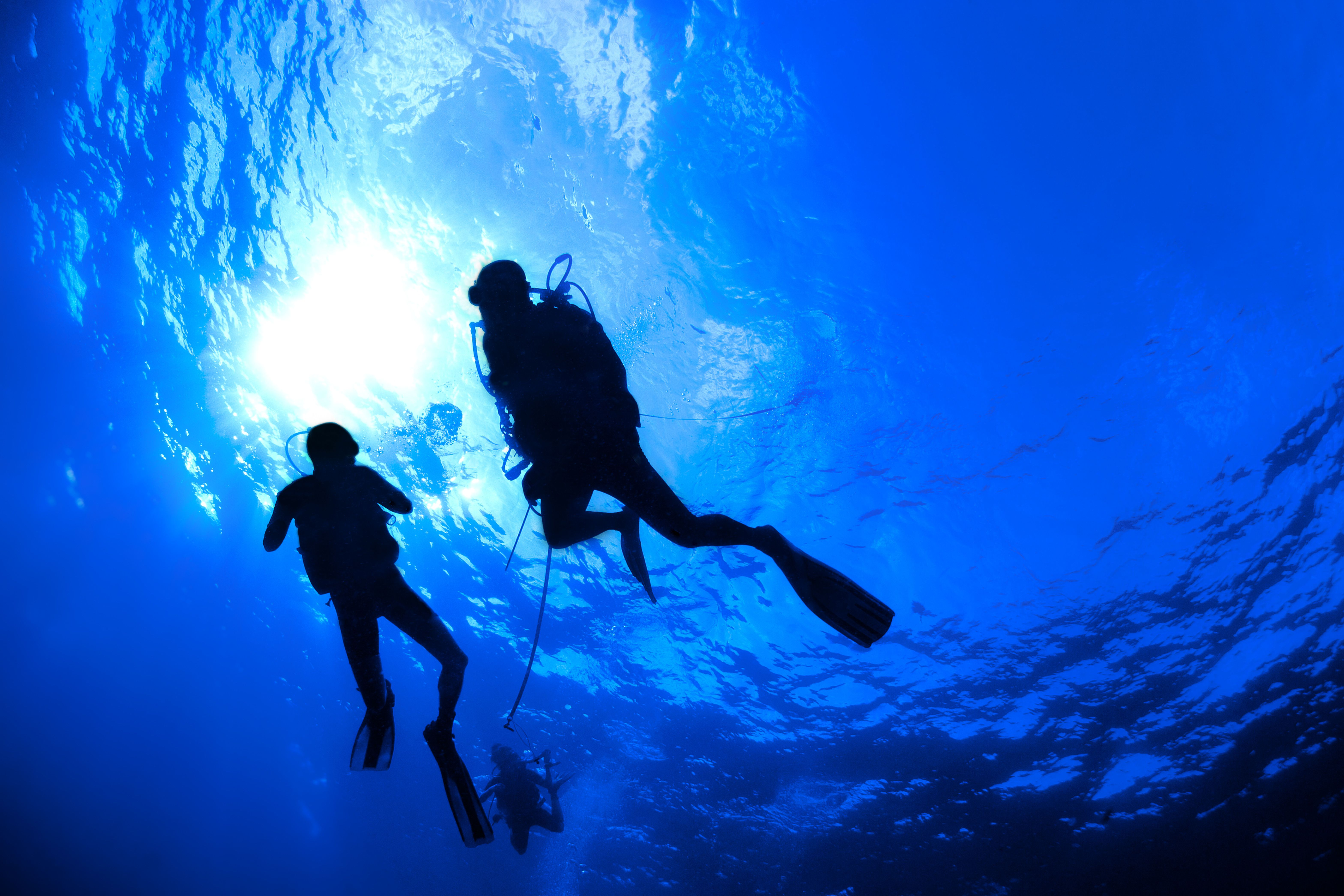 Check out this great shot of divers underwater