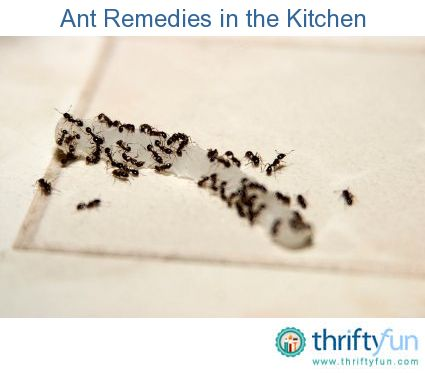 how to kill ants in your kitchen